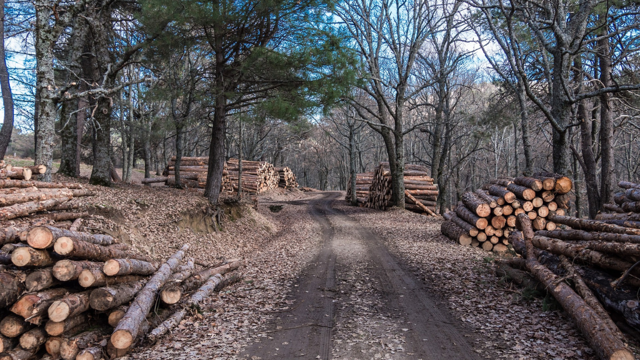 Comisia Europeană vrea 3 miliarde de copaci în plus până în 2030. România pierde 3 hectare de pădure pe oră.